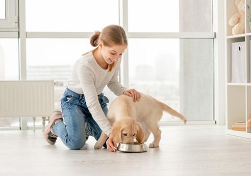 เลี้ยงสุนัขในคอนโดอย่างไรให้เหมาะสม ไม่รบกวนเพื่อนข้างห้อง
