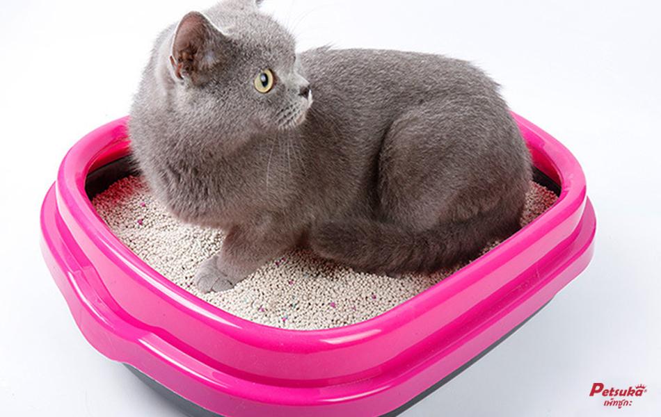 ทรายแมวเบนโทไนท์ Petsuka กลิ่นกาแฟ 5ลิตร