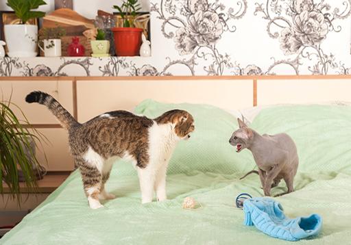 วิธีห้ามศึกระหว่างเหมียว เมื่อมีแมวตัวใหม่เข้ามาในบ้าน